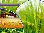 Fabrikant en leverancier van pesticiden wereldwijd - фото 1