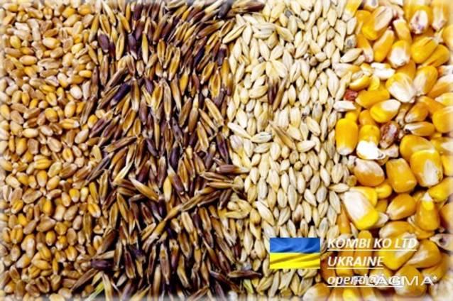 Feed Barley Ячмень Фуражный