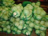 Ik ga koolgroothandel in Kazachstan verkopen - photo 2